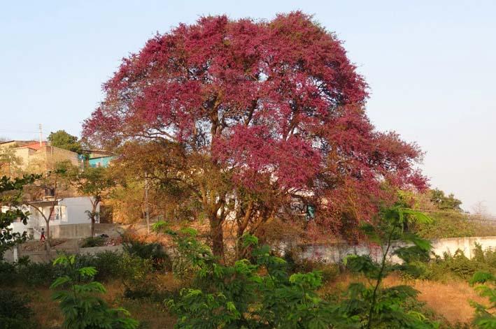 árboles nativos de colombia