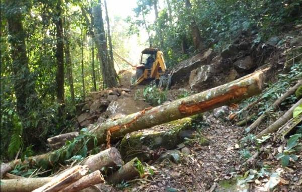 Santa Marta foco de deforestación en lo corrido de 2017: Ideam