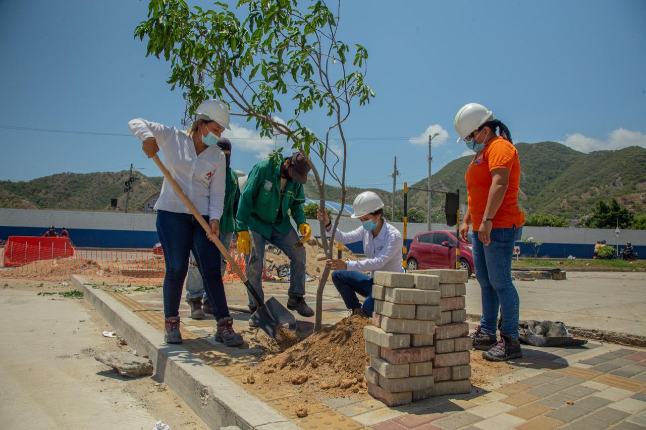 Edus sembró 20 árboles en la carrera 19 - Noticias de Colombia