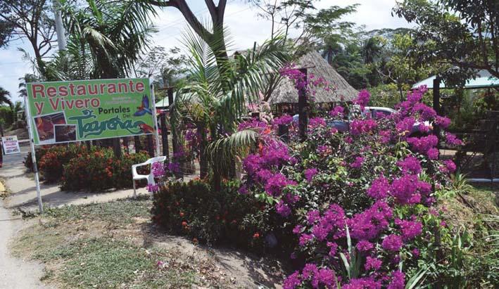 En portales del tayrona cuna de flores naturaleza y for Viveros frutales bogota
